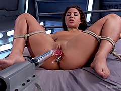 Ass, Machine, Tied, Daisy marie fuck machine, Txxx.com